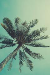 Retro nostalgic stylized palm tree with sky on background