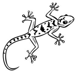 gecko lizard pattern