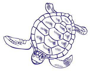 drawing sea turtle