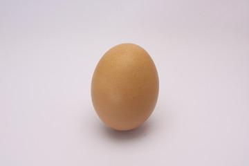 one egg on white background