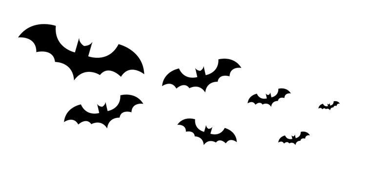 Fledermäuse Schwarm Fledermausschwam Bat Swarm