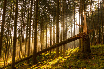 Sun spells shinning into the forest. Warm and dreamy looking photograph