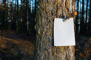 White paper sheet on tree trunk