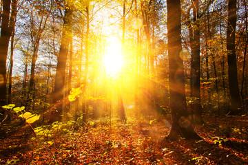 Fototapeta Herbstwald im Sonnenlicht