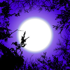 Dark background with black tree silhouettes on the sky and moon