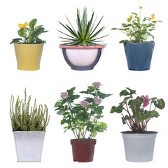 set of flowers in pots isolated on white