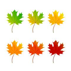 Set of maple leaf