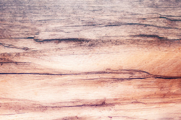 Obraz Texture tree 1bbb - fototapety do salonu