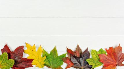 Fototapeta jesienny liść obraz