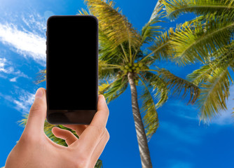 Hand holding mobile with black screen on Palm Trees background