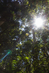 the sun breaks through the trees in the jungle