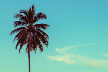 coconut palm tree, selective focus, vintage toning