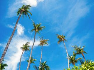 many coconut palm trees on blue sky
