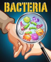Bacteria on human hands