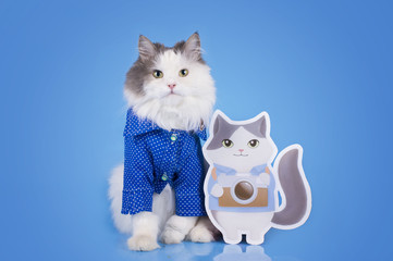 Cat in a smart shirt and his double on a blue isolated backgroun