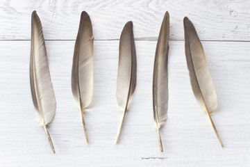 Feathers on white wooden background