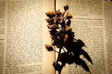 open old book.nostalgic vintage background