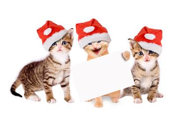 drei junge Katzen mit Weihnachtsmützen und Banner