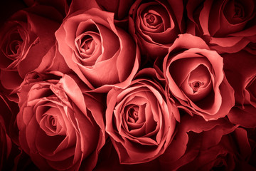 Natural background of fresh roses. Soft focus. Toned