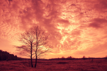 Beautiful sunset over field with tree