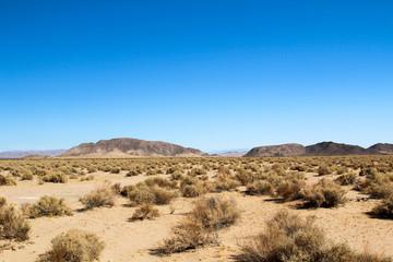 Mohave-Wüste