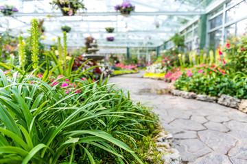 Ornamental flowers in a greenhouse.