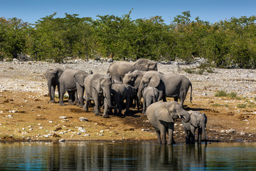 Animals drinking water in a waterhole inside the Etosha National Park, Namibia, Africa
