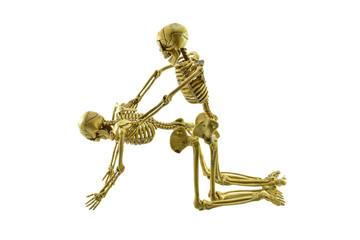human skeleton model lovers having sex on white background