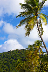 Scenic landscape of tropical island, Thomas Island, US Virgin Islands. Coconut palms with mountains and residential houses against a cloudy blue sky.