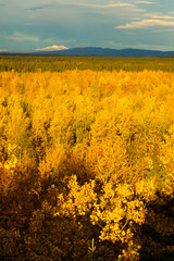 Yellow Leaves Fill Tanana River Valley Below Mountains Denali Al