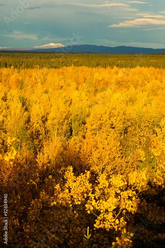 Wall mural Yellow Leaves Fill Tanana River Valley Below Mountains Denali Al