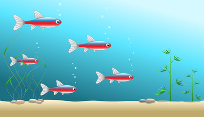 A shoal of cardinal tetras in an aquarium or in ocean or sea, vector illustration