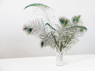Peacock feathers in vase on white wood table