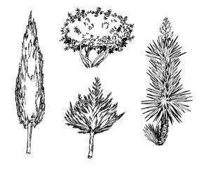 Hand drawn black and white different types of tree