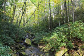 Little Santeetlah Creek in the Joyce Kilmer Memorial Forest in the fall