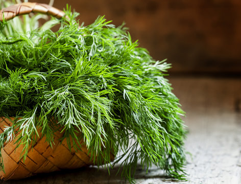 Fresh dill from the garden on the old wooden table in rustic sty