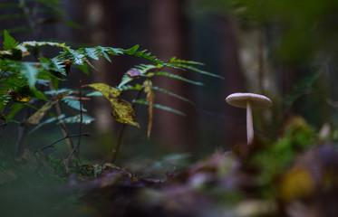 Fungi 47