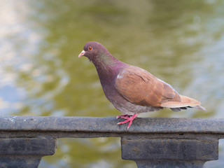 brown dove near the water