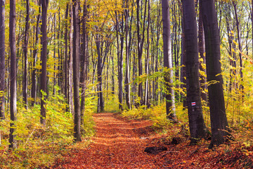 Footpath winding through colorful forest