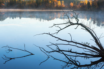 Tree branches in silhouette lying in the water with fog on the lake