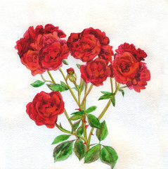 Flowers red roses bouquet. Watercolor painting