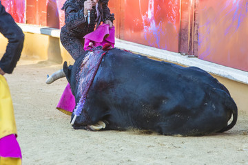 Wall Murals Bullfighting El arte del toreo y la polémica del maltrato animal de los toros en la corrida