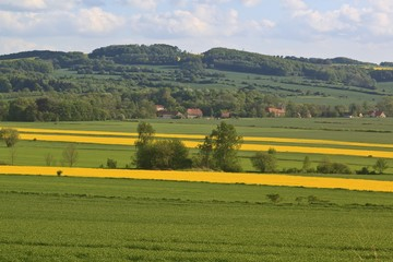 Summer landscape with yellow rape field