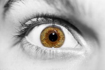 insightful look brown eye