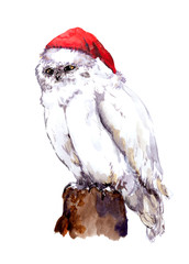 New year white owl bird in red santa's hat. Watercolour