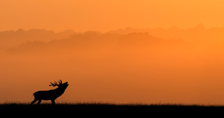 Wall Mural - Silhouette of a red deer stag against an orange misty background