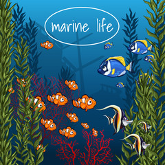 The marine life in bright colors