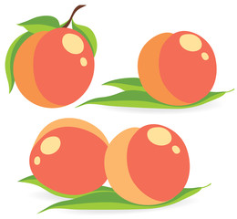 Collection of peach vector illustrations
