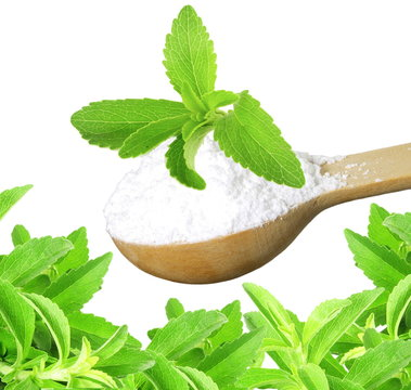 fresh green Stevia herb and extract powder in wooden spoon on white background