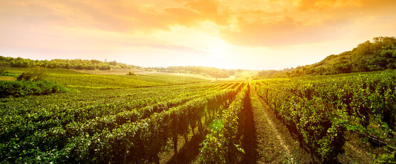 Photo sur cadre textile Vignoble landscape of vineyard